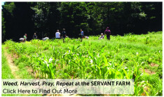 The Servant Farm